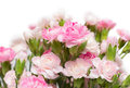 Bunch Of Carnation