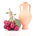 Bunch of the cherries with amphora isolated Royalty Free Stock Photos