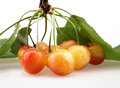 A bunch of cherries with leaves Royalty Free Stock Photo