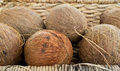 A bunch of coconuts in a basket nicely displayed wicker for sale at the farmers market Stock Photos