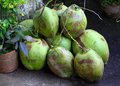 A bunch of coconuts fresh ready to be cut open Royalty Free Stock Image