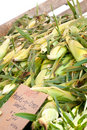 Bunch of corn ready for sale at local market Royalty Free Stock Images