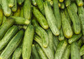 Bunch of cucumber Stock Images