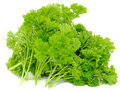 Bunch of Curly Parsley Stock Photos