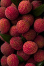 Bunch of delicious lychee fruits closeup freshly produced ripe and Royalty Free Stock Photos