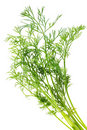 Bunch of dill Royalty Free Stock Photo
