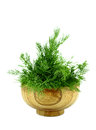 Bunch dill herb on white background Royalty Free Stock Photo