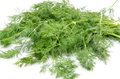 Bunch of dill isolated on white Royalty Free Stock Photo