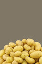 Bunch of dutch seed potatoes krieltjes on a brown background with copy space Stock Photos