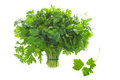 Bunch of flat leaf parsley  Stock Image