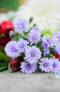 Bunch of flowers beaultiful closeup blossom Stock Images
