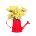 Bunch of flowers in the watering pot isolated on white backgroun Royalty Free Stock Photo