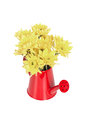 Bunch of flowers in the watering pot isolated on white Royalty Free Stock Photo