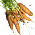 Bunch of fresh carrots Royalty Free Stock Image