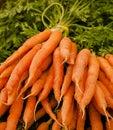 Bunch of fresh carrots in farmer's market Royalty Free Stock Photo
