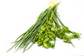 Bunch of fresh cilantro and Spring onions Royalty Free Stock Photo