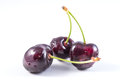 Bunch of fresh dark red cherries isolated Royalty Free Stock Photo