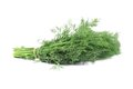 Bunch fresh dill herb close up. Royalty Free Stock Photo