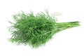 Bunch of fresh dill Royalty Free Stock Photo