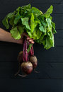 Bunch of fresh garden beetroot kept in man's hand Royalty Free Stock Photo