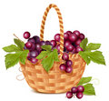 Bunch of fresh grape in the basket. Stock Photos