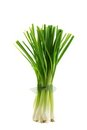 A bunch of fresh green Spring Onion Stock Images