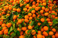 Bunch of fresh mandarin with leaves oranges on market Stock Photos