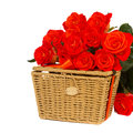 Bunch of fresh orange roses with basket isolated on white background Stock Photos