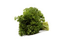 Bunch of fresh parsley. Royalty Free Stock Photo