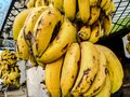 A bunch of fully ripened  bananas looks so delicious. Royalty Free Stock Photo