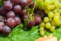 Bunch of grapes are a genus plants in the family vitaceae Stock Image