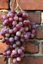Bunch of grapes hanging on a brick wall an old, country house. Royalty Free Stock Photo