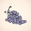 Bunch of grapes. Vector drawing