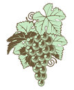Bunch of grapes on vine an illustration a a in a retro vintage woodblock style Royalty Free Stock Images