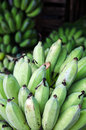 Bunch of green bananas at market vietnam Stock Photography