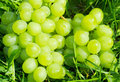 Bunch of green grapes on the ground Stock Photography
