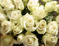 Bunch of greenish white roses background close up large Stock Images