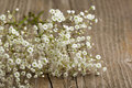 Bunch of Gypsophila (Baby's-breath) Royalty Free Stock Photo