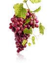 Bunch of juicy red grapes covwered by green leafs Stock Images
