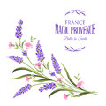 Bunch of lavender flowers. Royalty Free Stock Photo