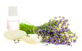 A bunch of lavender flowers on a white background with oil and stones Royalty Free Stock Photo