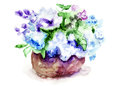 Bunch of lilac flowers watercolor illustration Royalty Free Stock Image
