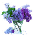 Bunch of lilac in glass vase isolated on white background Royalty Free Stock Image
