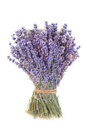 Bunch of lilac lavender on a white background. Royalty Free Stock Photo
