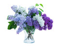 Bunch of lilac in vase isolated on white background Stock Images