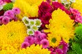 Bunch of mum flowers Royalty Free Stock Photo