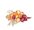 Bunch of onions Royalty Free Stock Photo