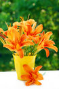 Bunch of orange day-lily Royalty Free Stock Photography
