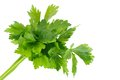 Bunch of parsley Royalty Free Stock Photography