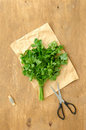 Bunch of parsley and scissors